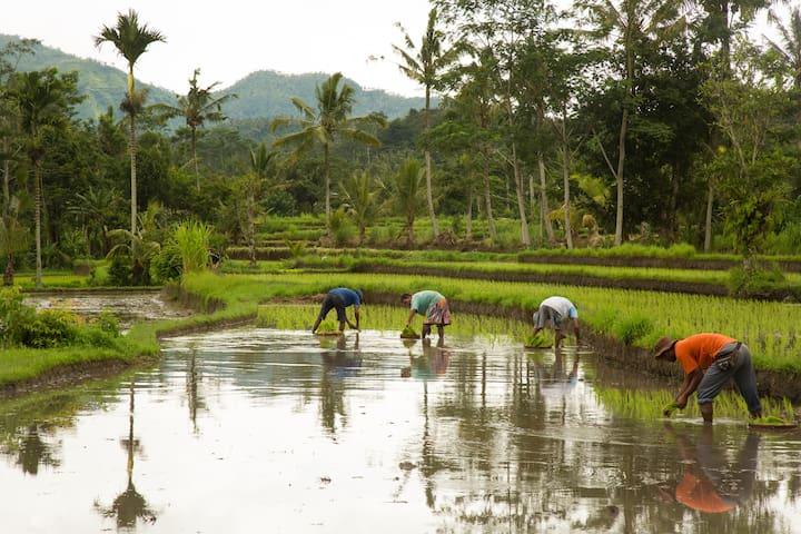 Pondok Bali Agung Sidemen