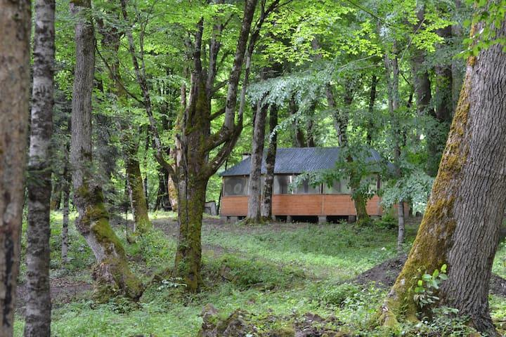 Домик на Ранчо в лесу