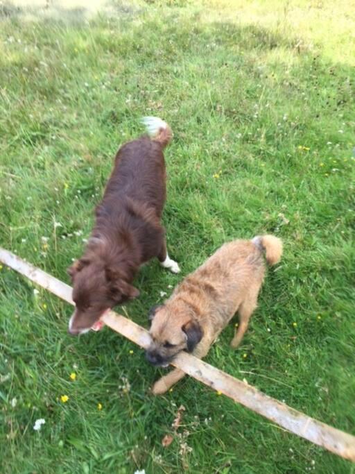 Pip and Oscar .