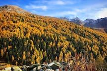 Herbst im Turtmanntal / automne dans la Vallée de Tourtemagne / autumn in Turtmanntal