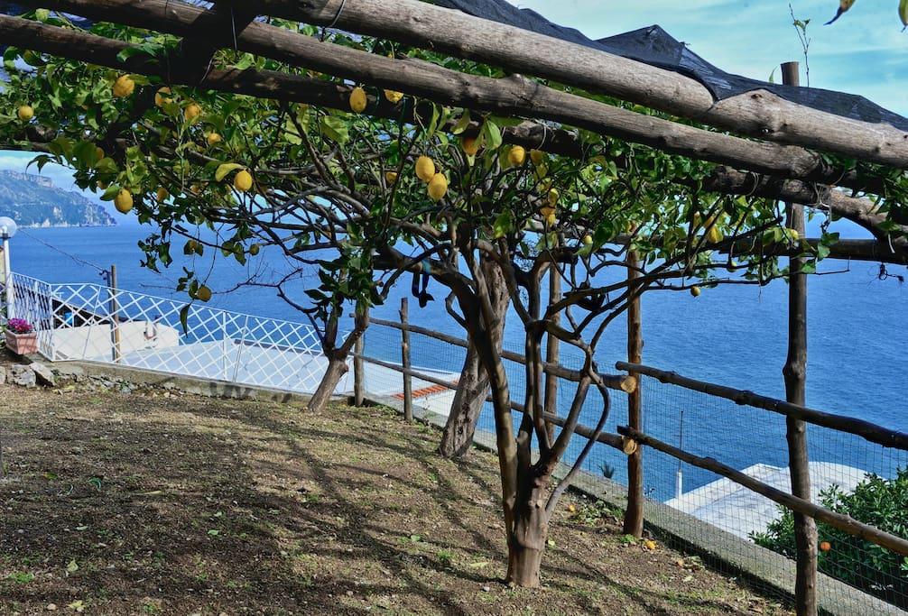 Giardino privato con limoneti e agrumeti