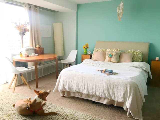 Comfy Queen Bed (dog not included but would happily visit and say hello!)