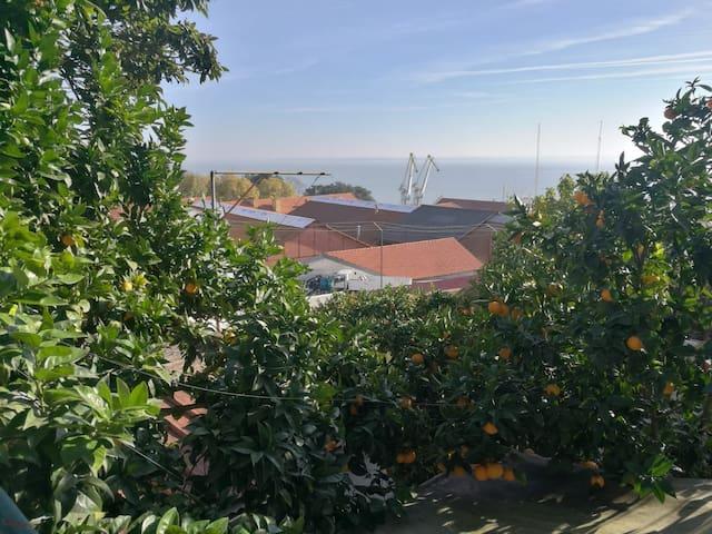 Fleur d oranger