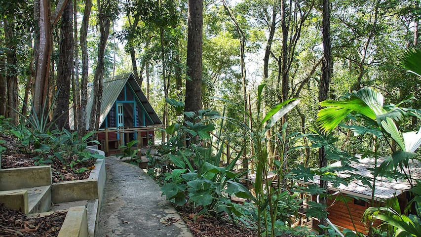 Tree Cabin - Walking Distance to Great Surf