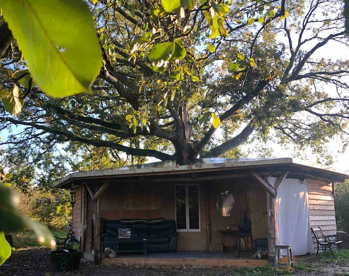 The Hive 'Tree' house