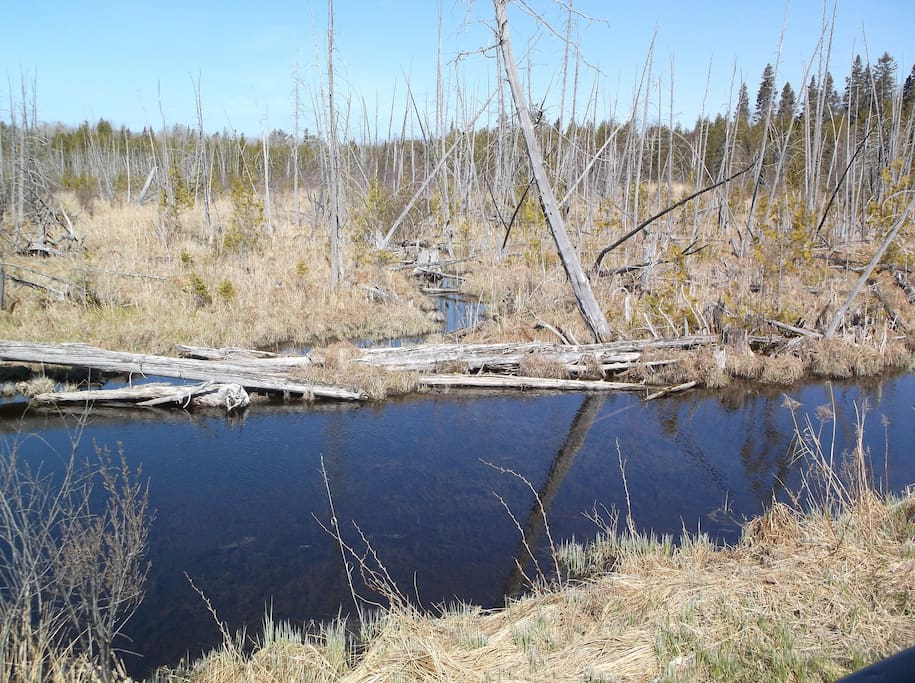 April-Prentice Creek and the beaver meadow.  A good spot to sight a kingfisher.