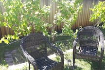 Relaxing with a grape vine