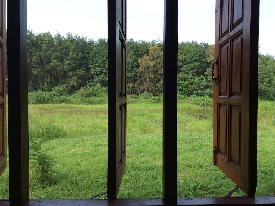 view from your room in the wooden chalet