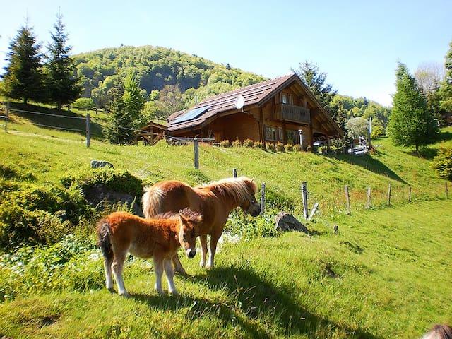 chalet des mazieres - Bussang - Hytte (i sveitsisk stil)