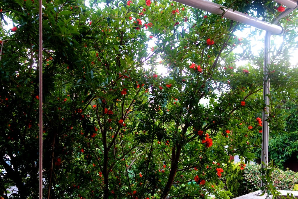 Flowers in my terrace