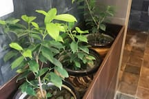 real indoor plants to help clean the polluted air