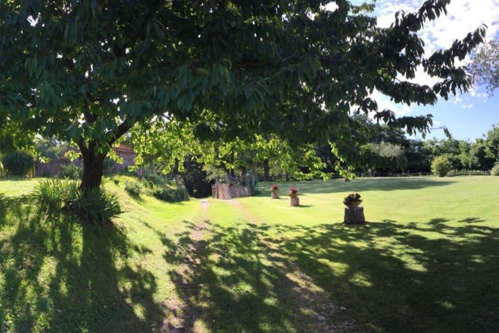 giardino ingresso ciliegio - Tenuta Santa Barbara