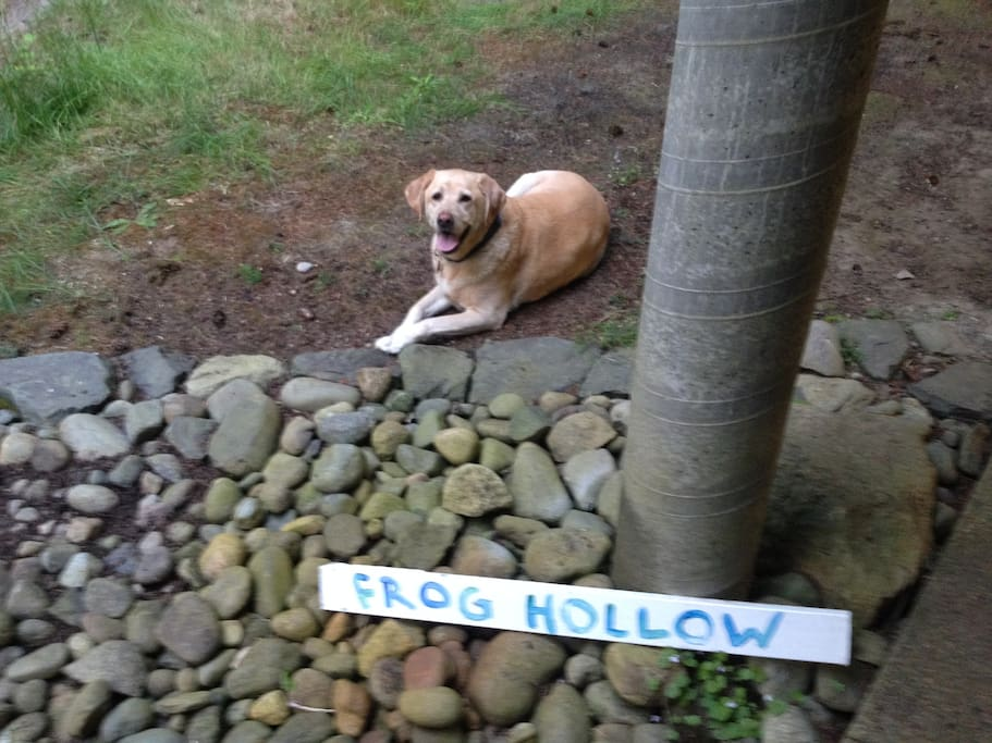 Big Yellow Lab Welcomes you to Frog Hollow