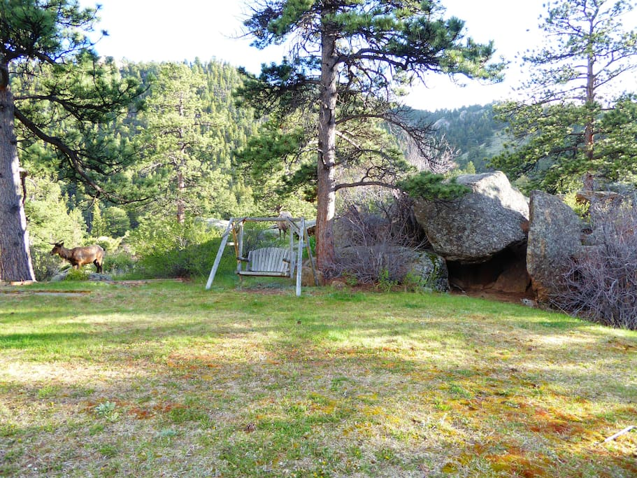 Front lawn - wildlife, dense forest, rock outcroppings, swing all on 2 ac of land
