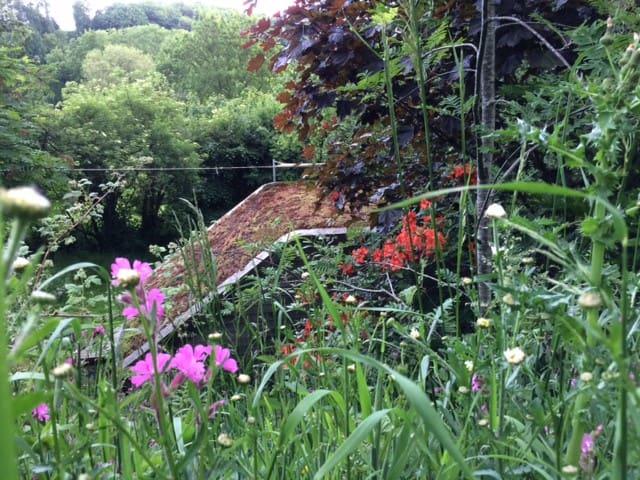 View through wild flowers onto the sedum roof of the Eco Pod