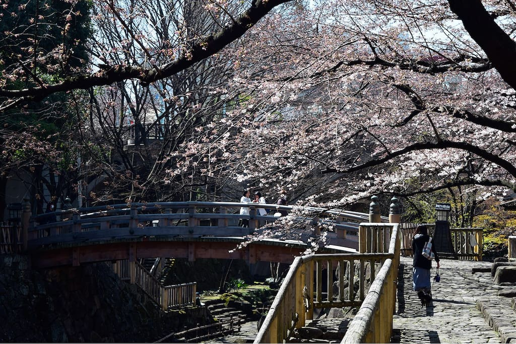 An 18-minue walk from the apartment,the Imperial Palace is the most popular sport for Sakura. Great place for Hanami.