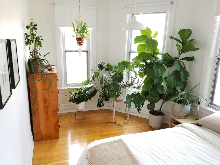 Sunny bedroom with lots of plants