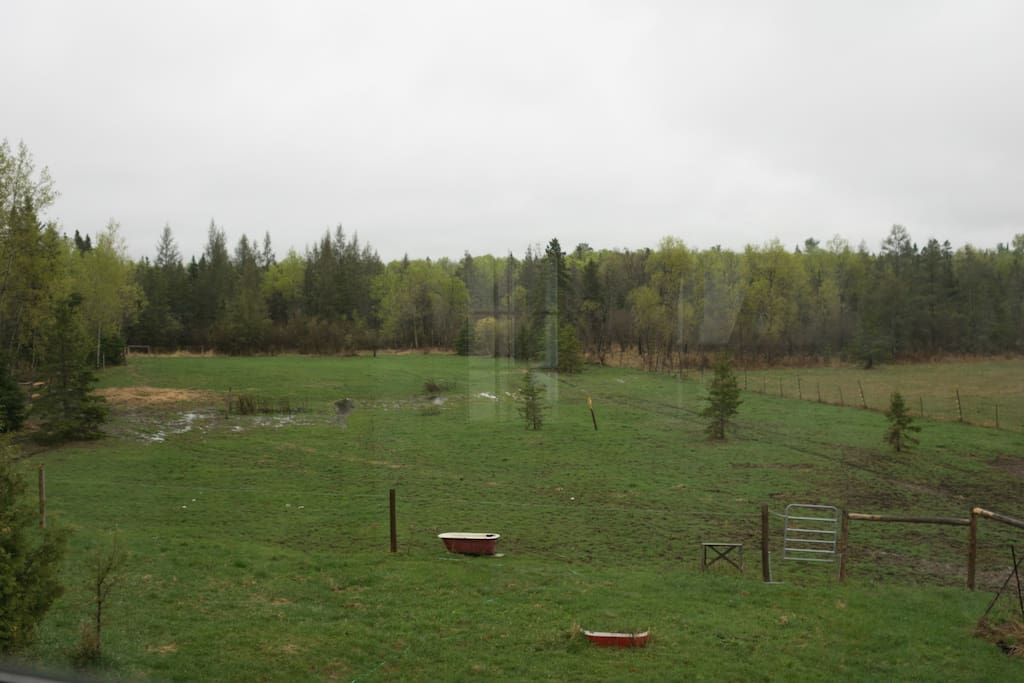 View from bedroom (deer are not an uncommon sight)
