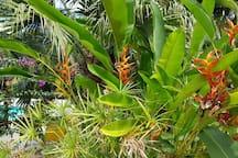 Jardin Tropical.