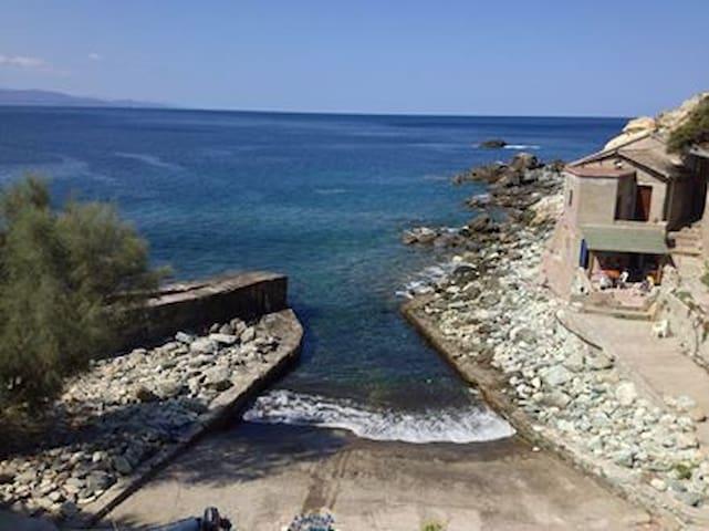 Acortelina - Canari - House