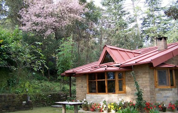 Snow View Cottage - Almora - Bungalov
