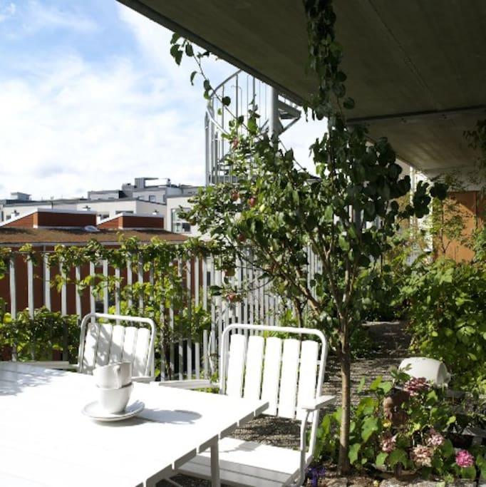 Breakfast on the green balcony
