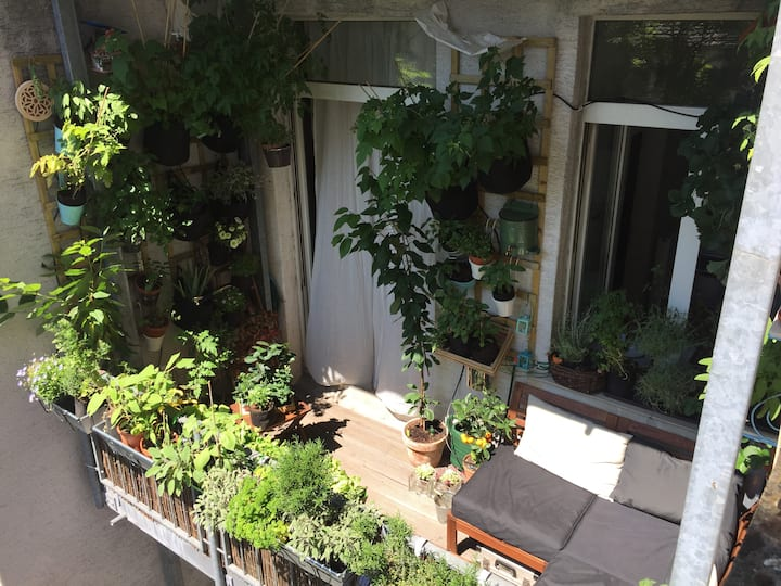 """Sunny apartment - """"Green Oasis"""" in central Cologne"""