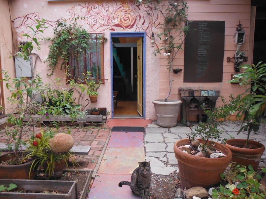 Private enclosed garden- Marco the studio cat