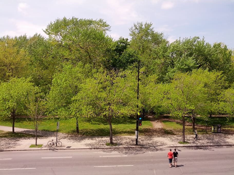View from Front Balcony of Parc LaFontaine