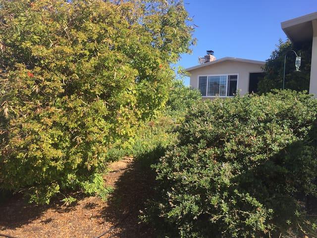 Quiet neighborhood near Monterey and the ocean