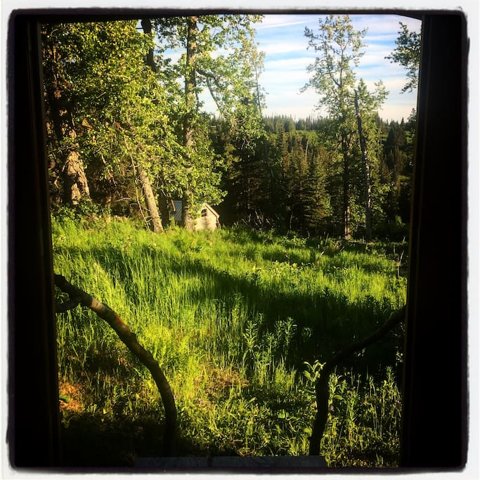 View from Yurt door