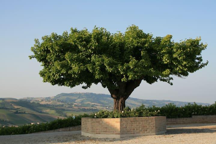 Winery Le Canà - Carassai - วิลล่า
