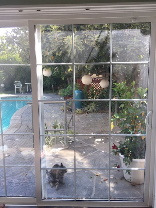 View through the 8' wide sliding glass doors when shutters are open.