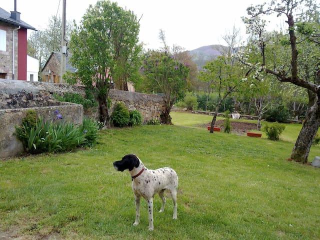 Espacio-jardín de la casa