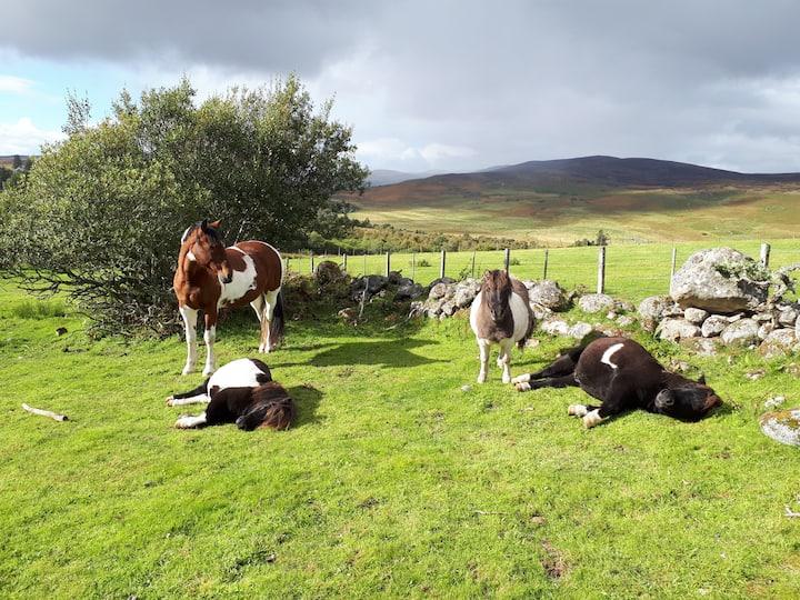 The ponies love visitors!