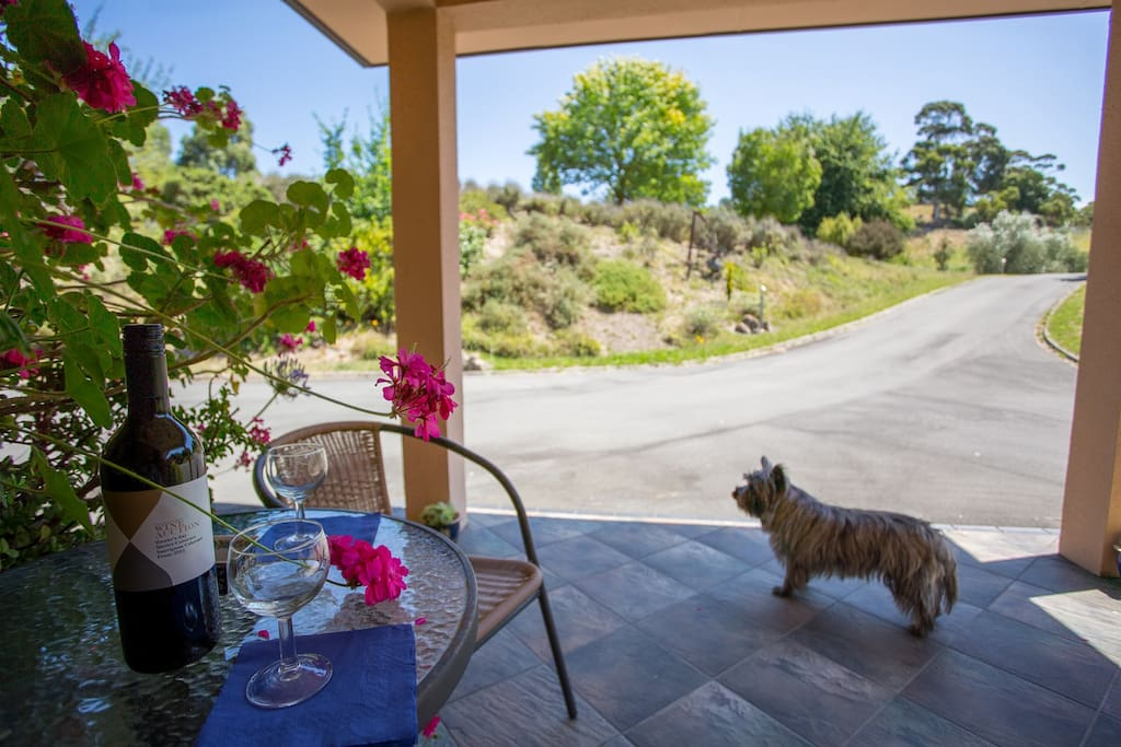 Our little Cairn Terrier, Skye waiting for visitors.