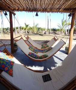 Cacao and coconut farm on the beach