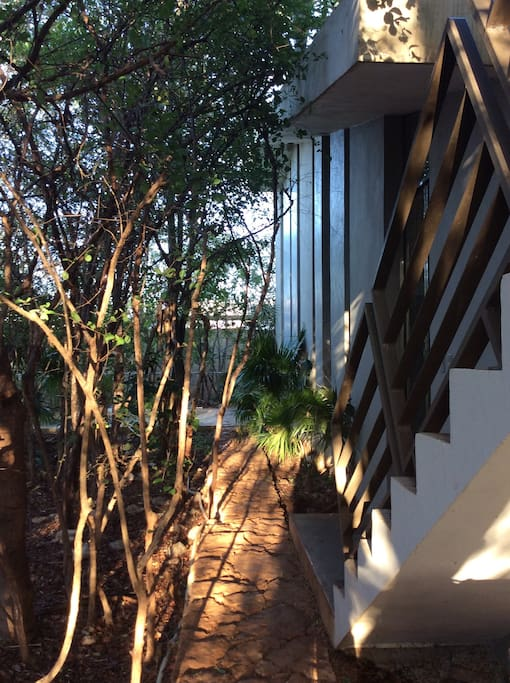 A home immersed in nature