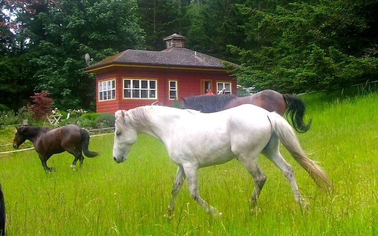 The Rose Cottage - Talking Horse Farm on Orcas - Eastsound - Cabin