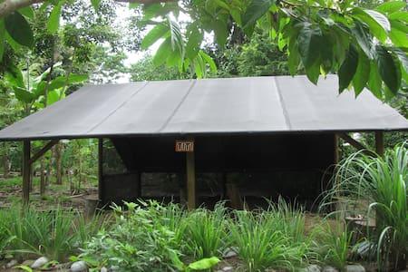 Titi Tent Space A @ Finca Morpho Permaculture Farm - Puerto Jiménez - Tent