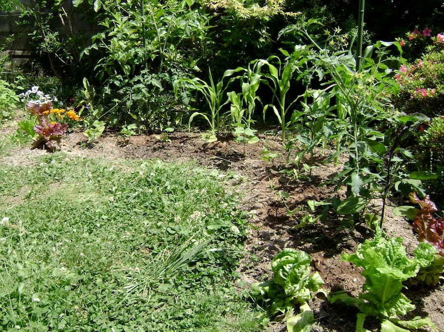 The garden is not there with veges any more, but the love was around at one time!