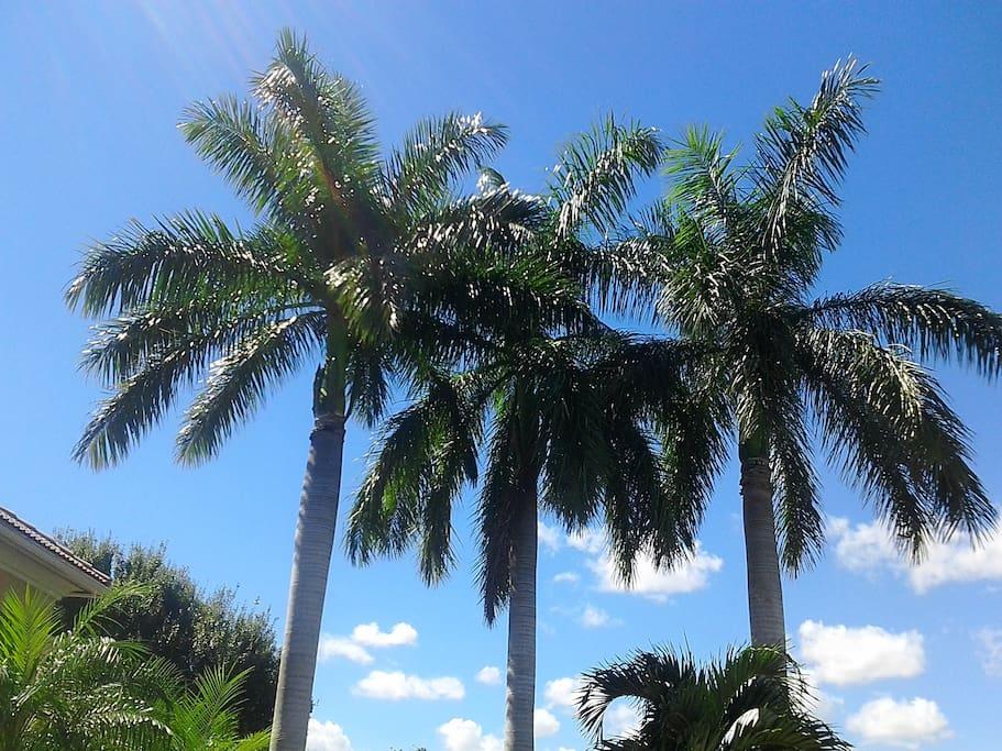 South Florida Palms
