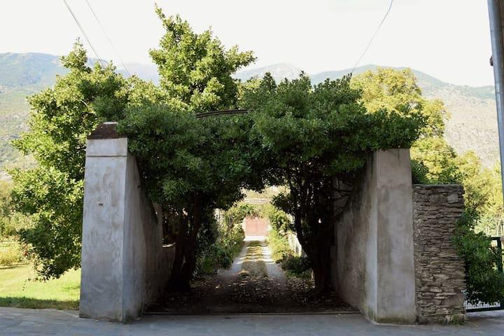 """Stanza privata  """"Acacia"""" - Susa"""