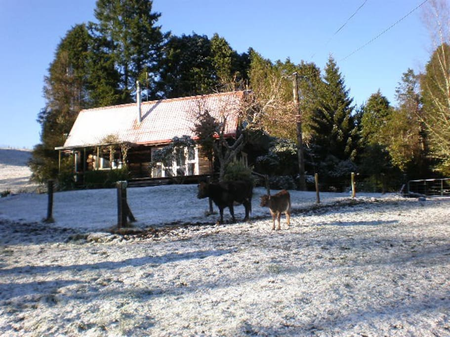 Log Cabin in the snow. We have animals grazing in the surrounding paddocks - horses and cows.