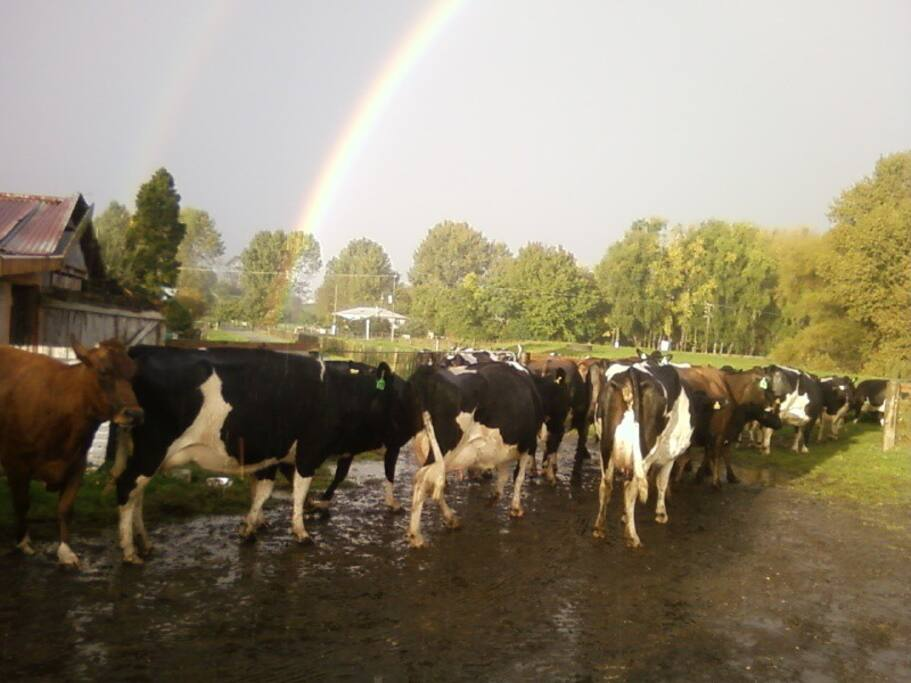 Have a dairy farm experience