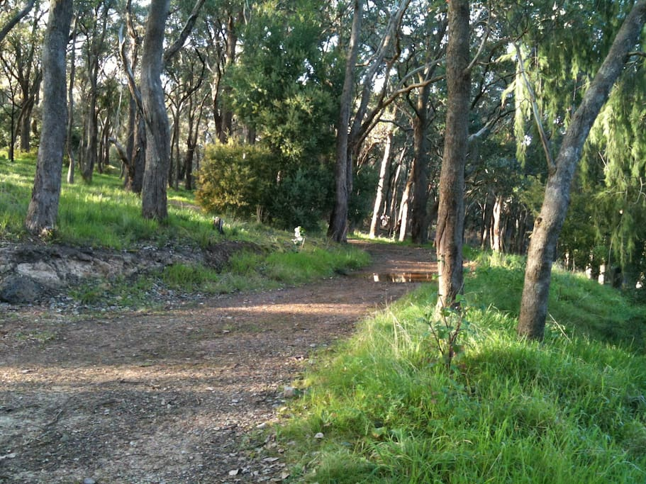 Country bush tracks for walking