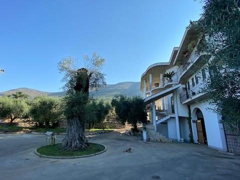 Villa tra gli ulivi alle pendici dei monti Ausoni