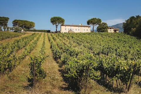 Antique Farmhouse Hills Lucca