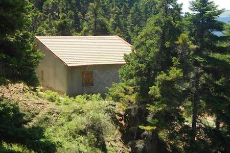Κατοικία στο βουνό μέσα στα έλατα - Earth House