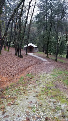 Yurt Living in Grass Valley (pets allowed)